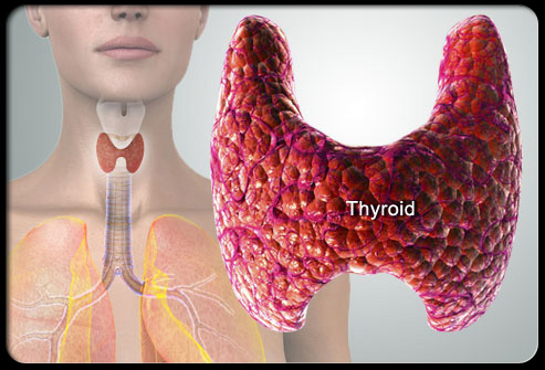 Just in case you're wondering where your thyroid gland is.